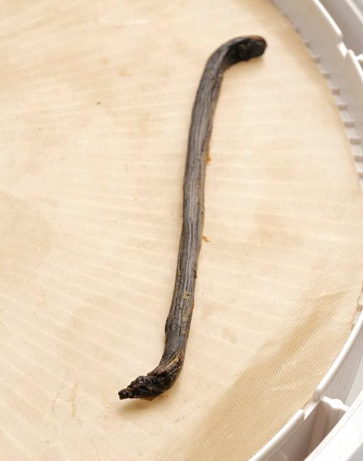 Apio deshidratado con apariencia de vaina de vainilla