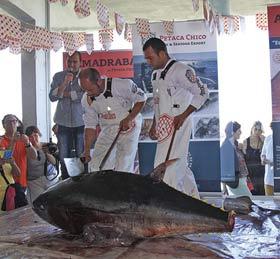Pesca del atún